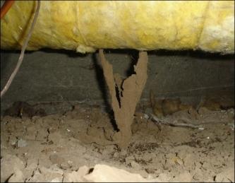 termites.com-tubes-under-floor-insulation