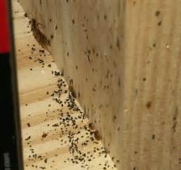 roach droppings